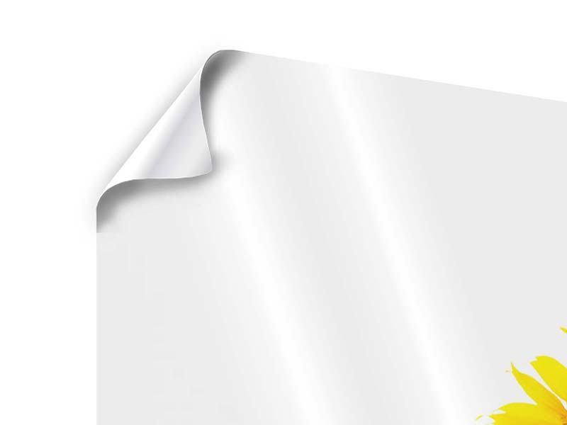 Panorama Poster 3-teilig Das Sonnenblumenfeld