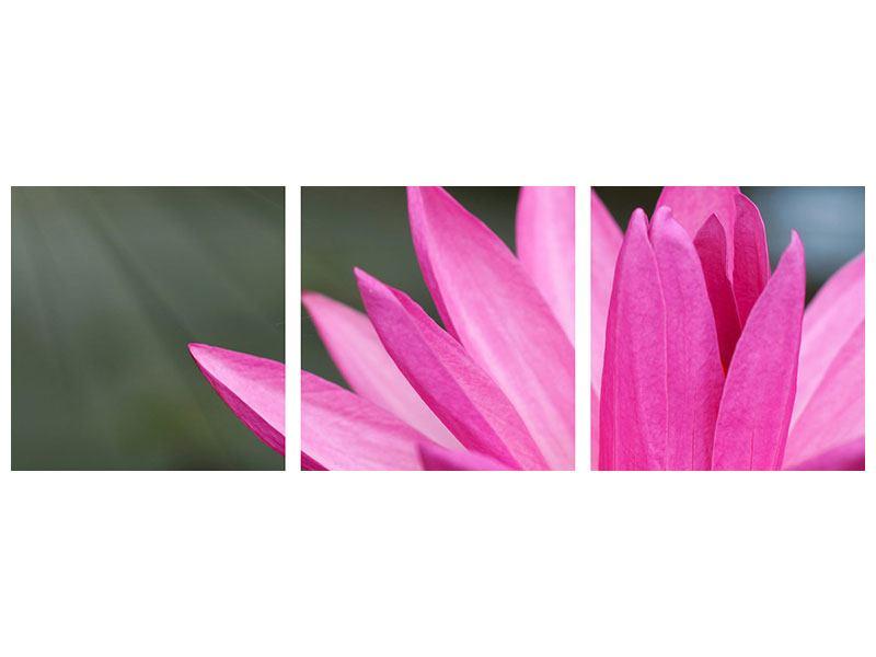 Panorama Poster 3-teilig XXL Seerose in Pink