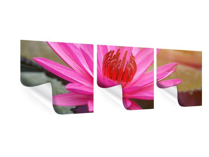 Panorama Poster 3-teilig Sonnige Seerose