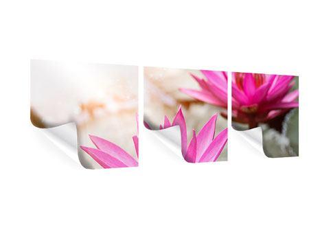 Panorama Poster 3-teilig Lotus-Duo