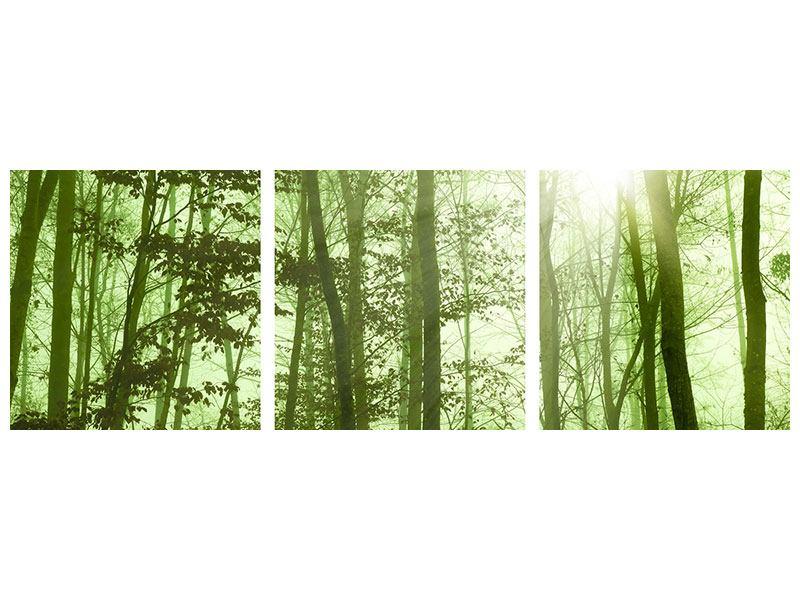 Panorama Poster 3-teilig Nibelungenwald