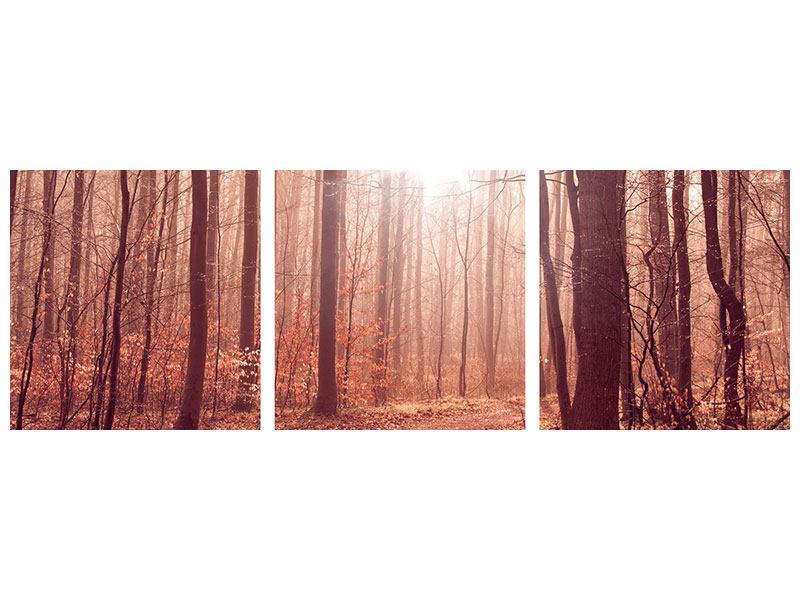 Panorama Poster 3-teilig Sonnenuntergang im Herbstwald