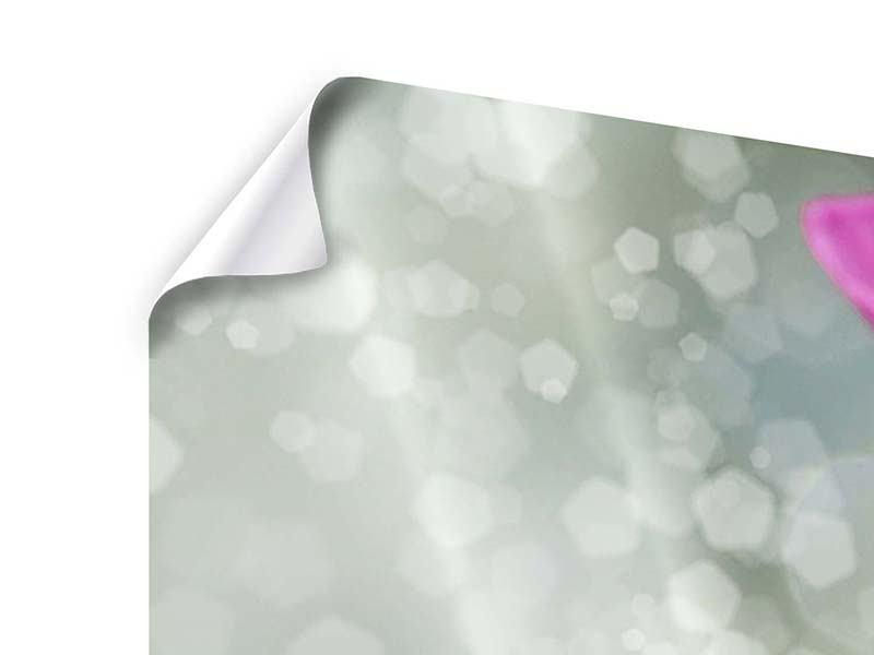 Panorama Poster 3-teilig Libelle auf dem Seerosenblatt