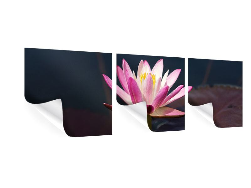 Panorama Poster 3-teilig Seerose in der Abenddämmerung