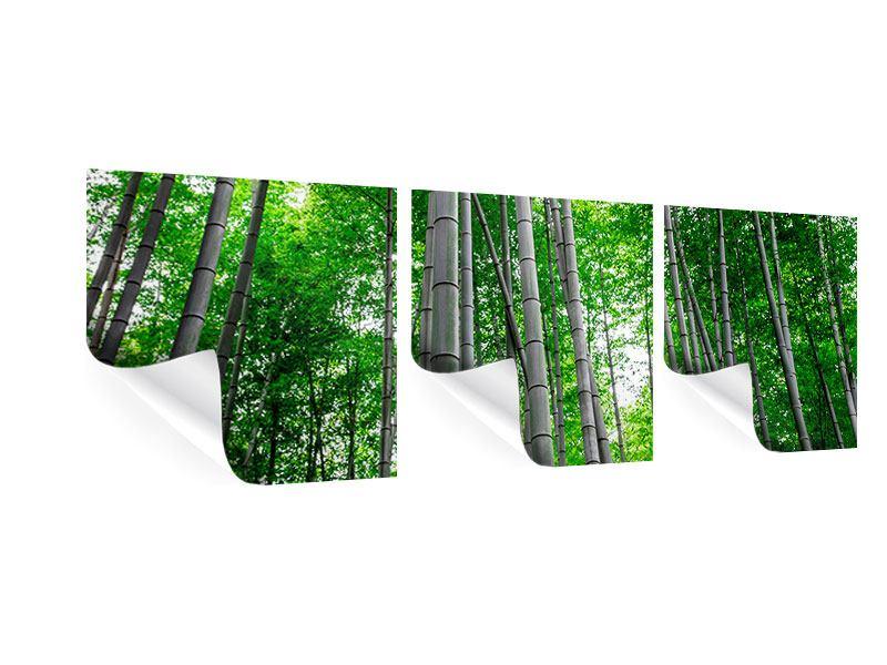 Panorama Poster 3-teilig Bambuswald