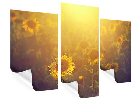 Poster 3-teilig modern Sonnenblumen im goldenen Licht
