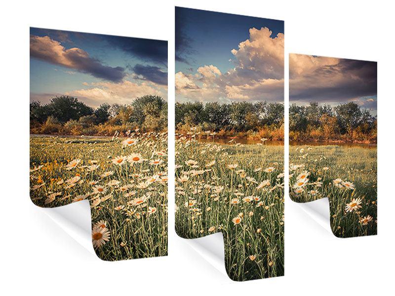 Poster 3-teilig modern Die Wiesenmargerite am Fluss
