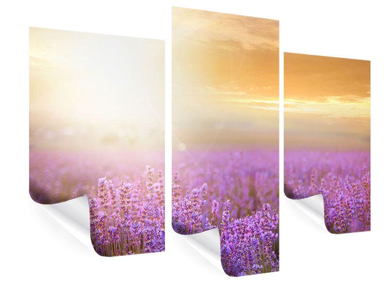 Poster 3-teilig modern Sonnenuntergang beim Lavendelfeld
