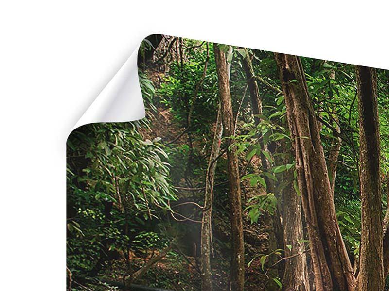 Poster 3-teilig modern Deep Forest