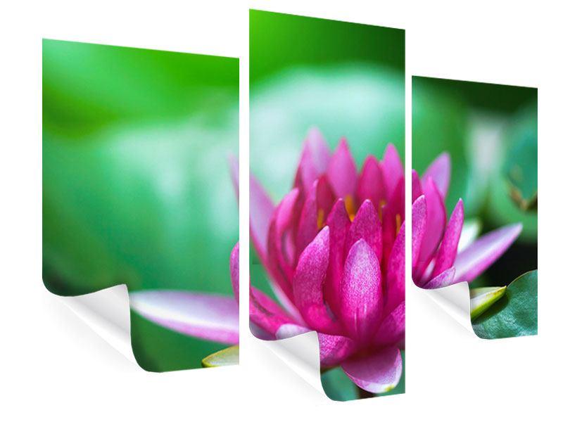Poster 3-teilig modern Lotus in Pink