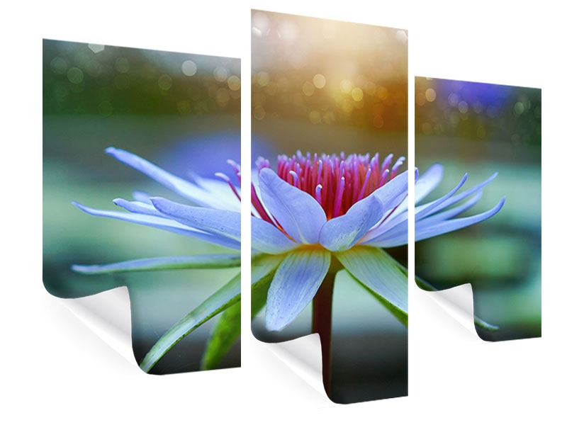 Poster 3-teilig modern Pretty Lotus