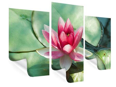 Poster 3-teilig modern Der Frosch und das Lotusblatt