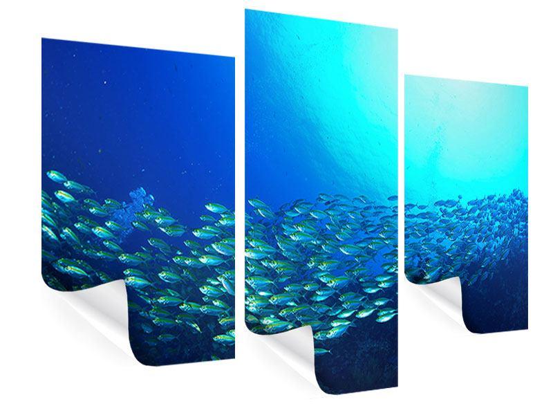 Poster 3-teilig modern Fischschwarm