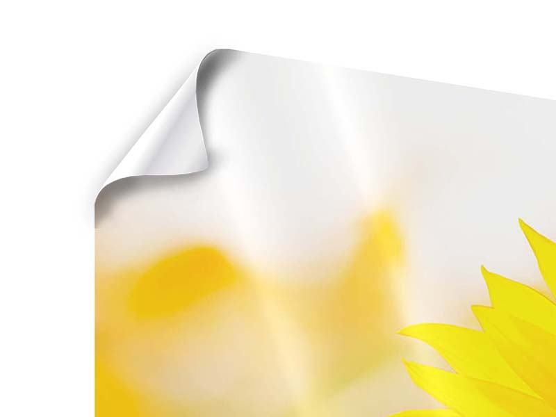 Poster 3-teilig modern Sunflower