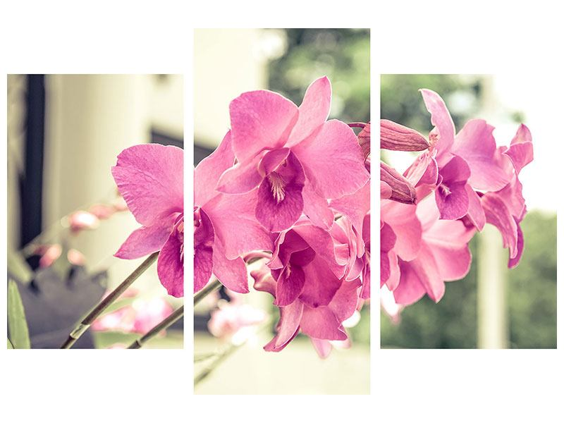 Poster 3-teilig modern Ein Fensterplatz für die Orchideen