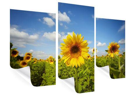 Poster 3-teilig modern Sommer-Sonnenblumen