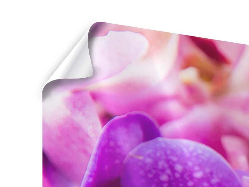 Poster 3-teilig modern Im Orchideenparadies