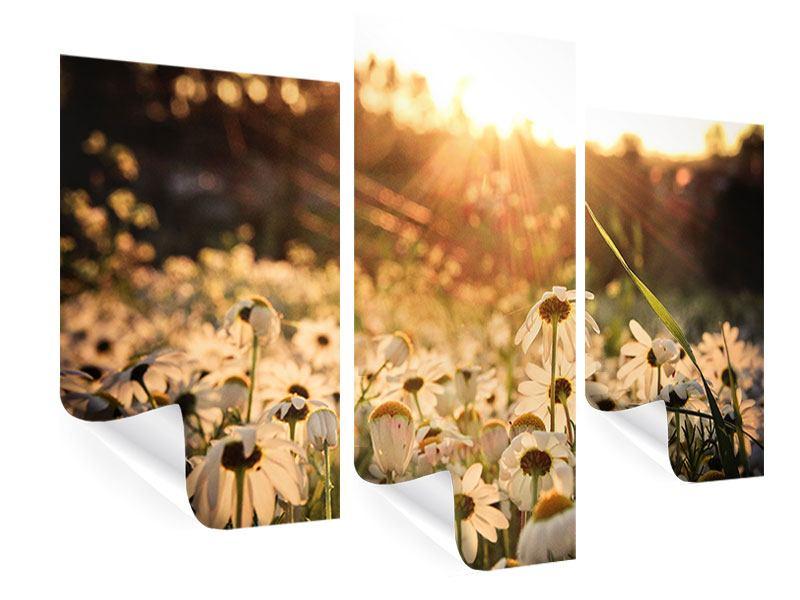 Poster 3-teilig modern Gänseblümchen bei Sonnenuntergang