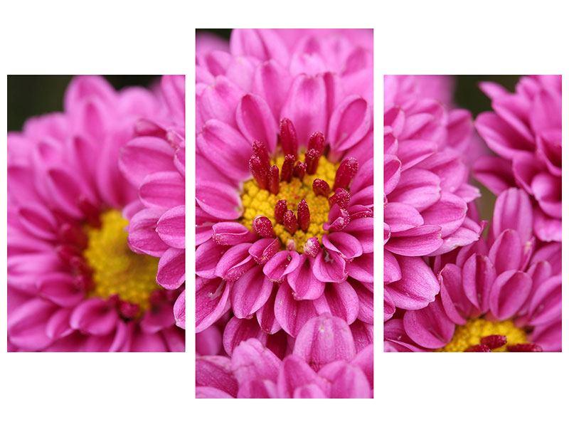 Poster 3-teilig modern Chrysanthemen