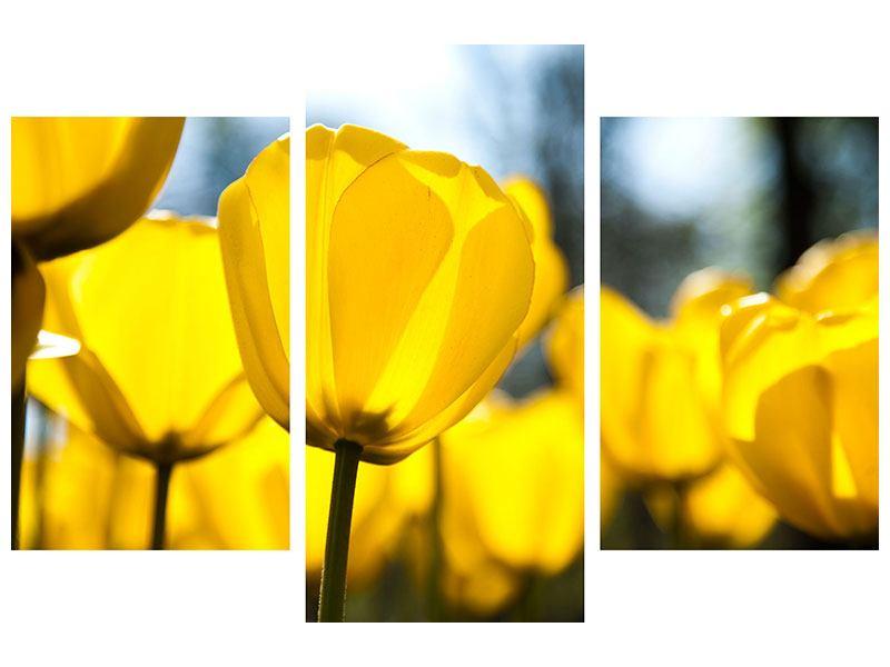Poster 3-teilig modern Gelbe Tulpen in XXL