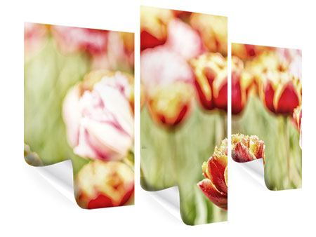 Poster 3-teilig modern Die Schönheit der Tulpe