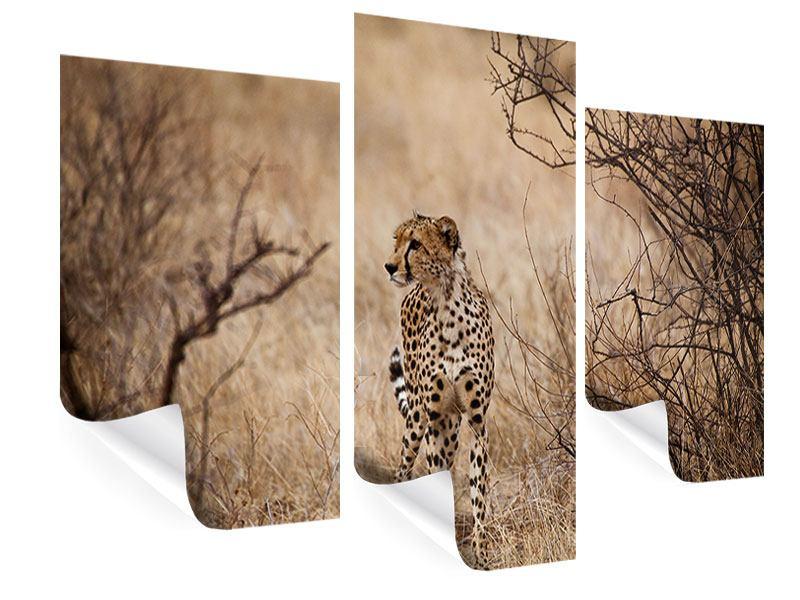 Poster 3-teilig modern Eleganter Gepard