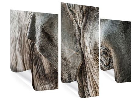 Poster 3-teilig modern Close Up Elefant