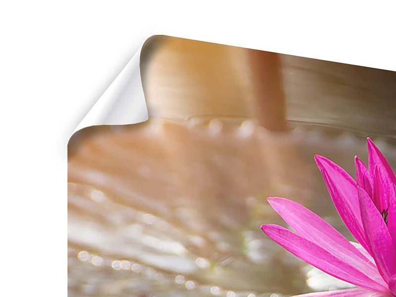 Poster 3-teilig modern Seerosen im Morgentau