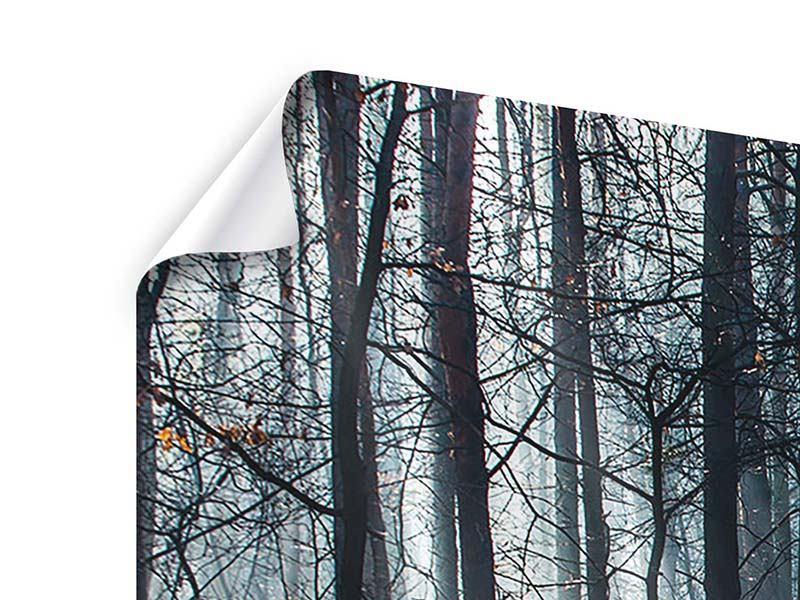 Poster 3-teilig modern Wald im Lichtstrahl