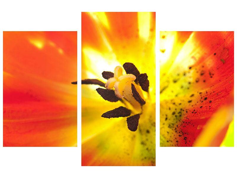 Poster 3-teilig modern Die Narbe einer Tulpe XXL