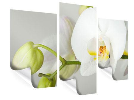 Poster 3-teilig modern Riesenorchidee
