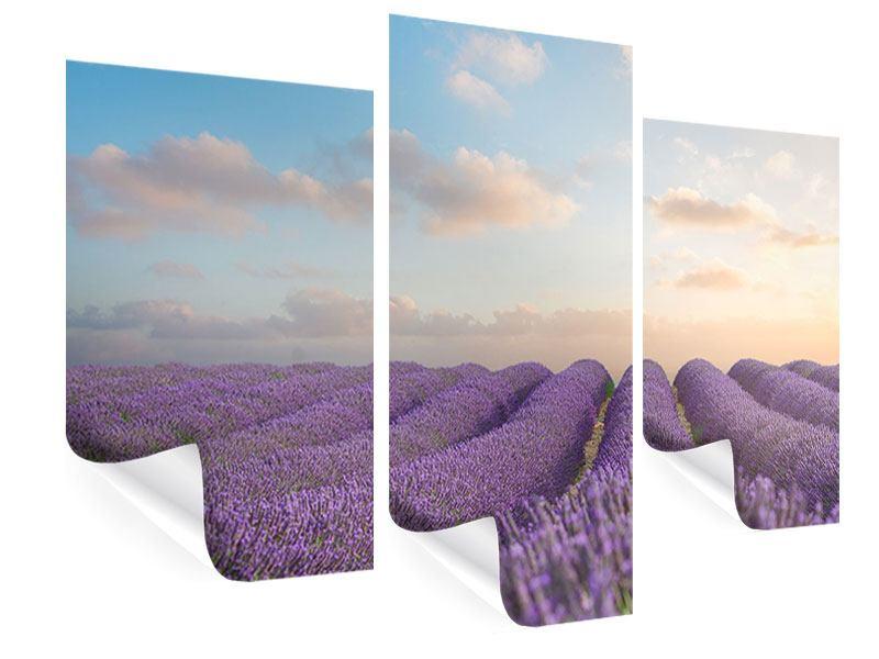 Poster 3-teilig modern Das blühende Lavendelfeld