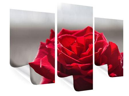 Poster 3-teilig modern Rote Rosenblüte