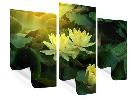 Poster 3-teilig modern Wilde Lotus
