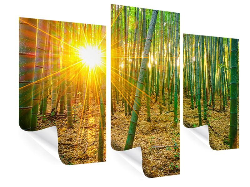 Poster 3-teilig modern Bambusse