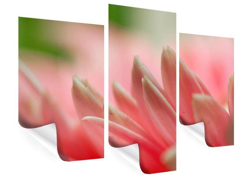 Poster 3-teilig modern Close Up einer Blüte