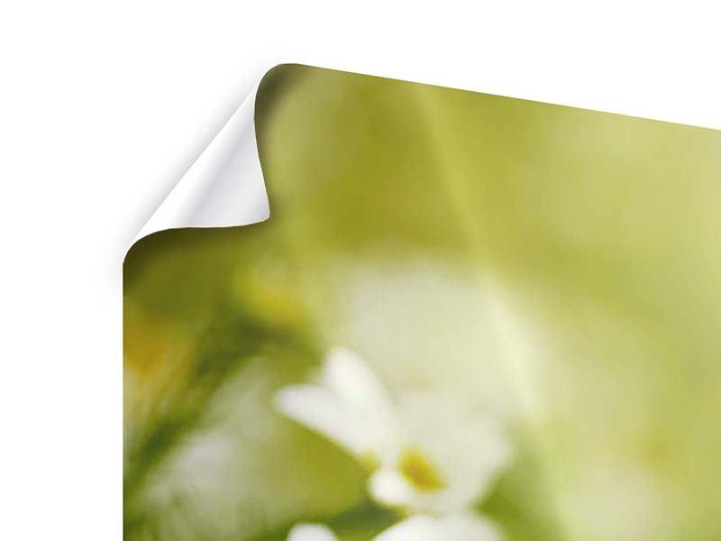 Poster 3-teilig modern Die Gänseblümchen
