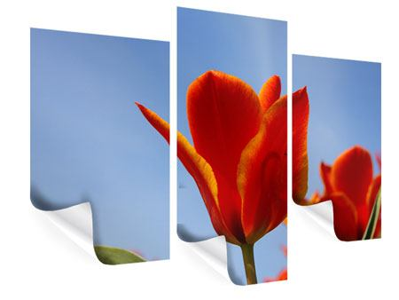 Poster 3-teilig modern Rote Tulpen in XXL