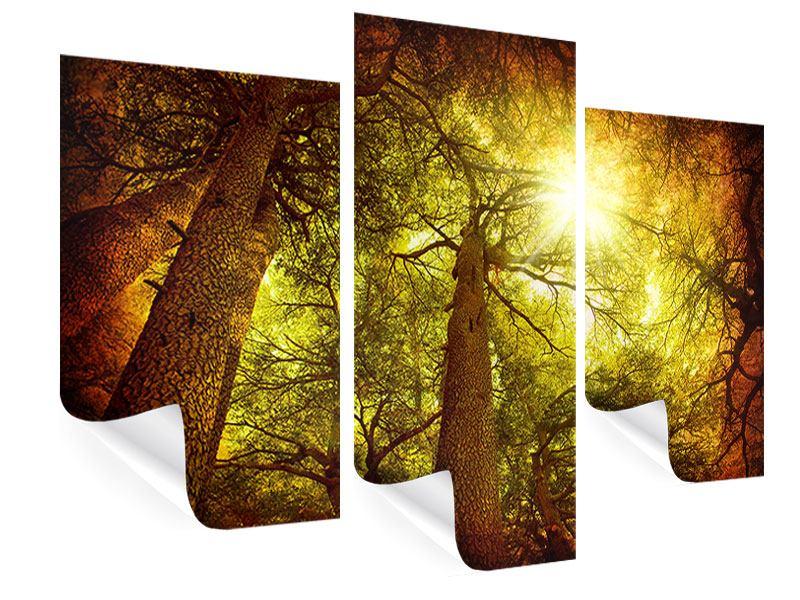 Poster 3-teilig modern Cedar Baum