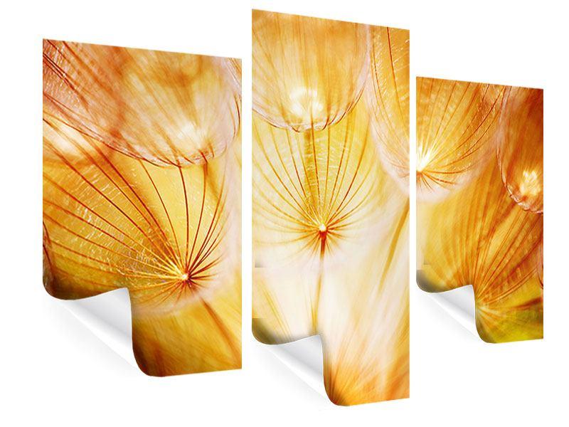 Poster 3-teilig modern Close Up Pusteblume im Licht