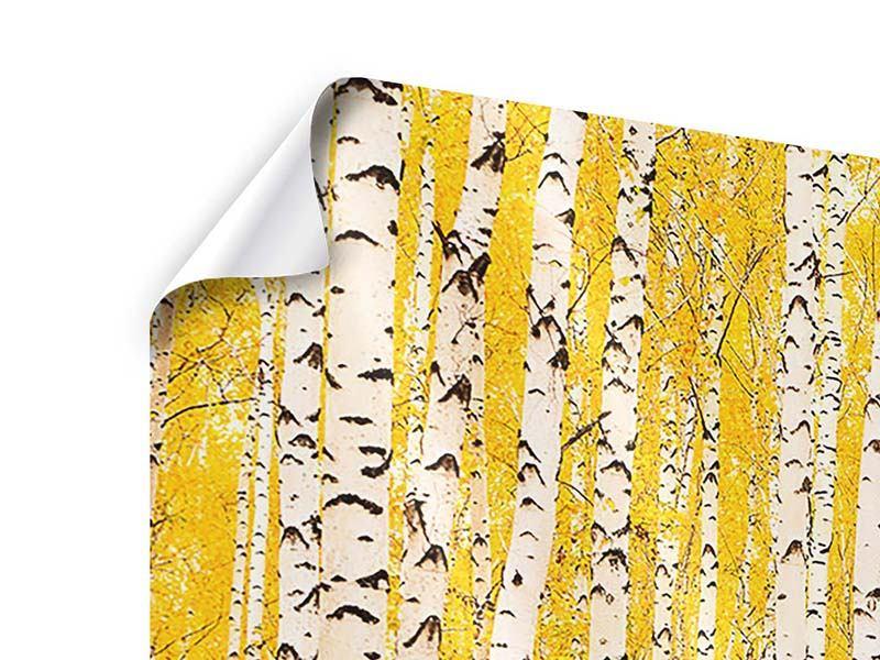 Poster 3-teilig modern Der Birkenwald im Herbst
