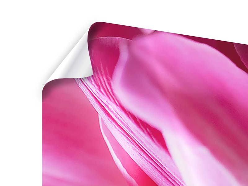 Poster 3-teilig modern Makro Tulpen