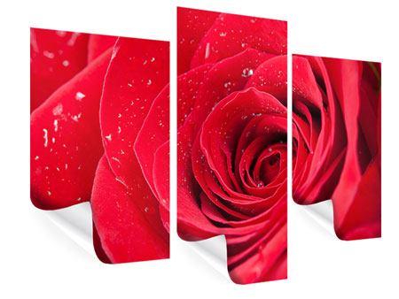 Poster 3-teilig modern Rote Rose im Morgentau