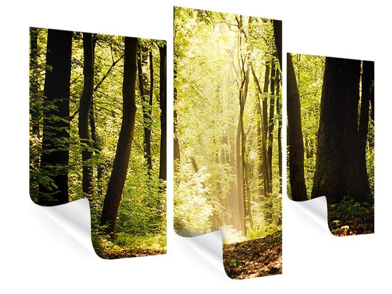 Poster 3-teilig modern Sonnenaufgang im Wald