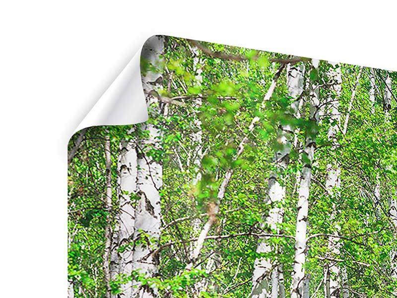 Poster 3-teilig modern Der Birkenwald