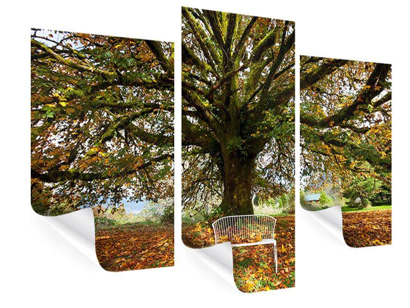 Poster 3-teilig modern Mein Lieblingsbaum