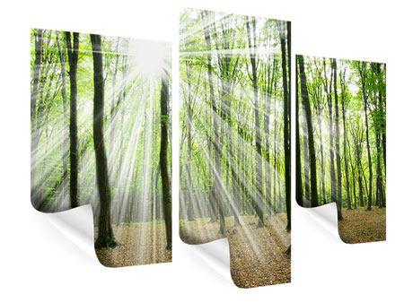 Poster 3-teilig modern Magisches Licht in den Bäumen