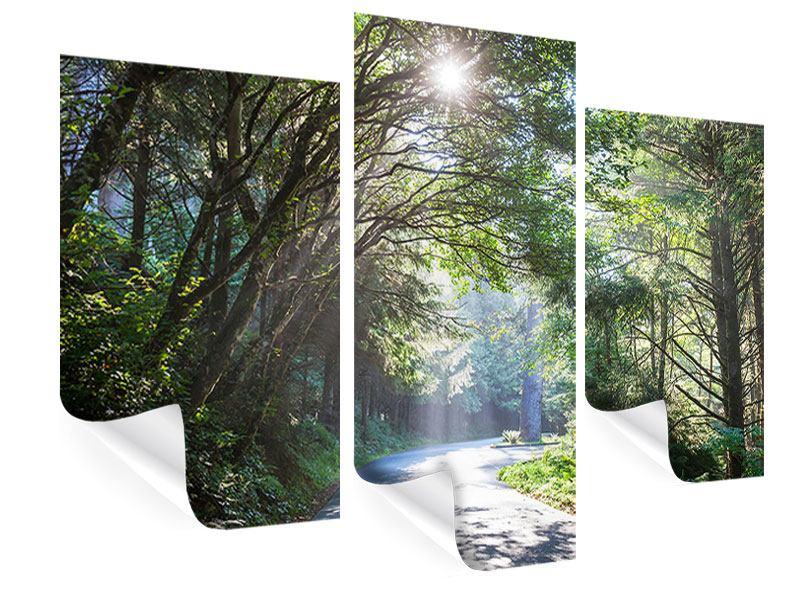 Poster 3-teilig modern Sonniger Waldweg