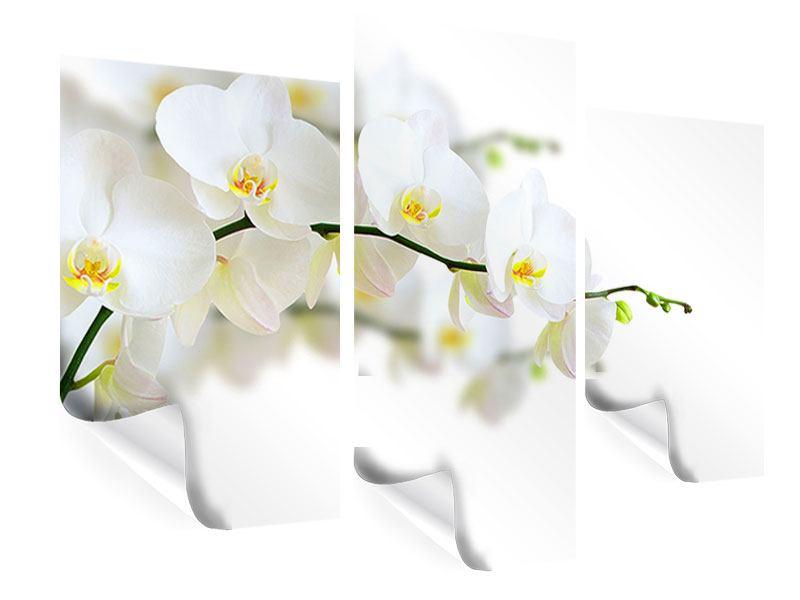 Poster 3-teilig modern Weisse Orchideen