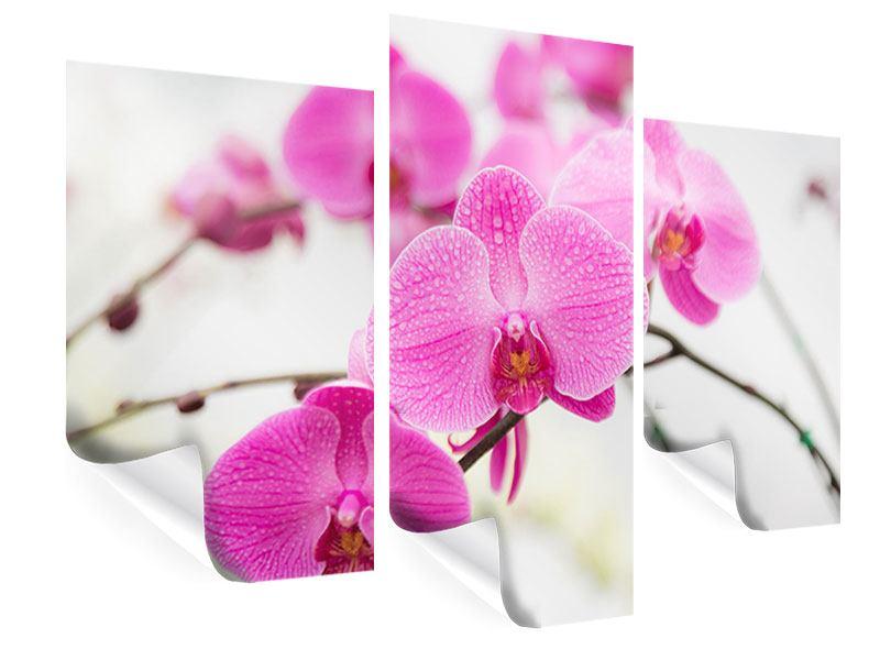 Poster 3-teilig modern Das Symbol der Orchidee